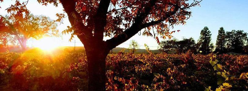 Vineyards surrounging Alexander Valley Hall